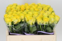 R Gr Yellow Qualirosa 40sm