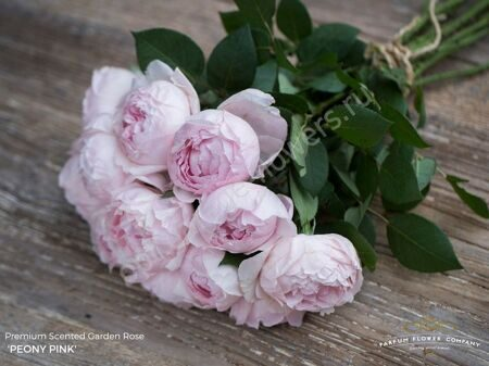 R Gr Scented Garden Peony Pink