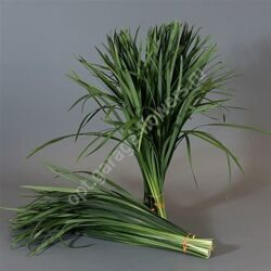 Dec T-grass Groen X5